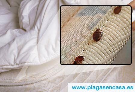 Consejos para eliminar una plaga de chinches de cama | Plagas en casa