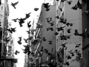 Palomas en la ciudad.